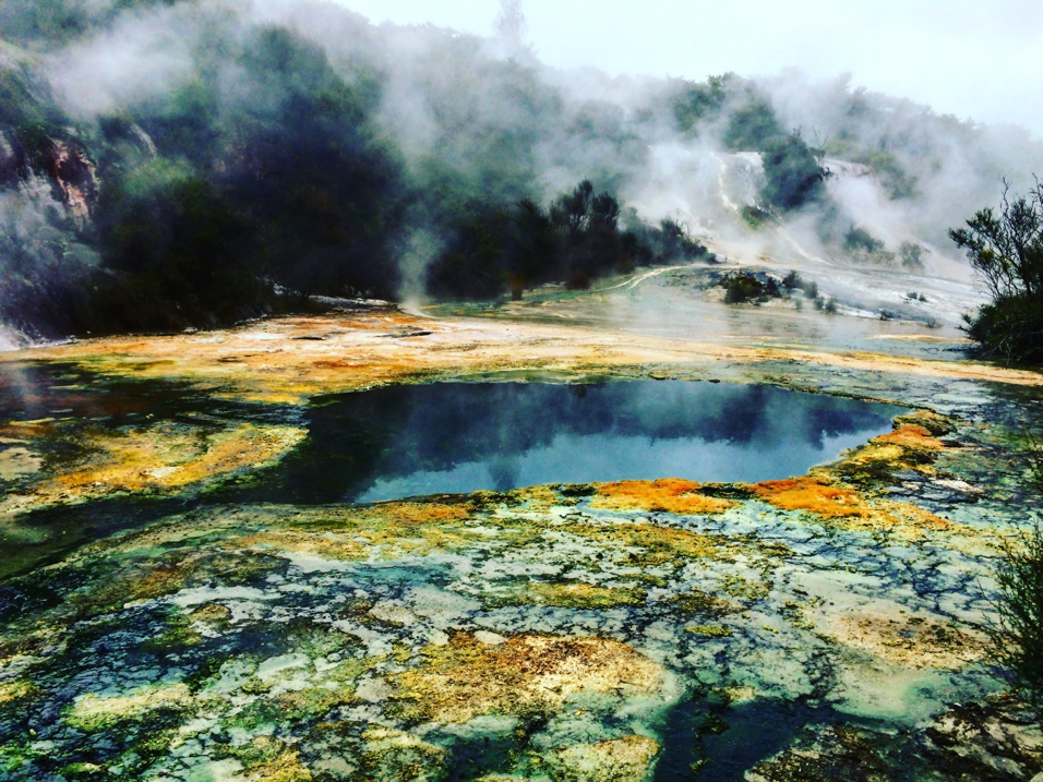 Lots of thermophilic amoebae around 'Map of Africa', a hotspring feature in the Orakei Korako geothermal field.